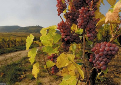 Vignoble et route des Vins