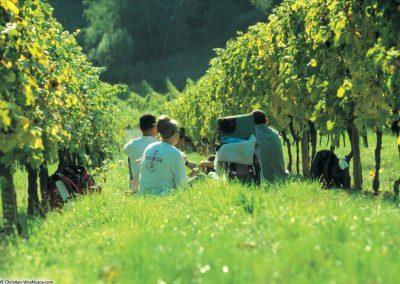 Pique-nique dans les Vignes concocté par la maison HAULLER