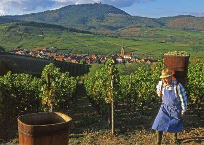 Le travail de la Vigne sur la Route des vins d'Alsace